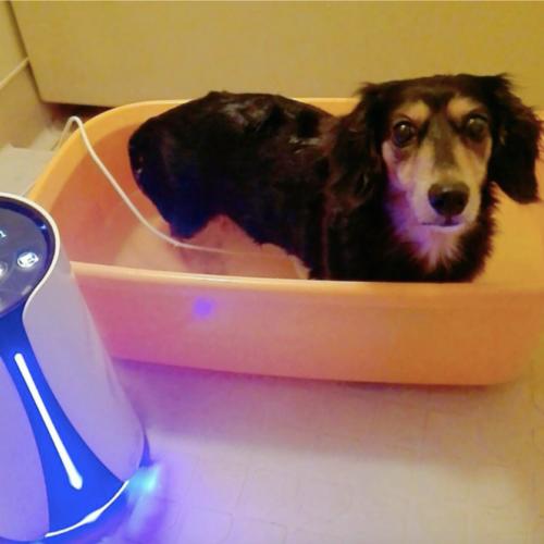水素風呂リタライフを使うペットの犬